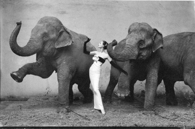 Dorian_Leigh_Richard_avedon_elefantes-Marco_sandor